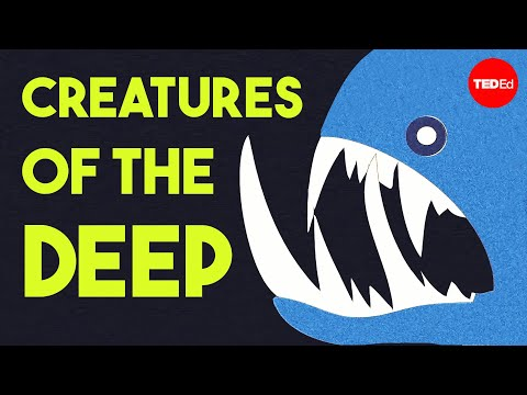 Video image: The otherworldly creatures in the ocean's deepest depths - Lidia Lins