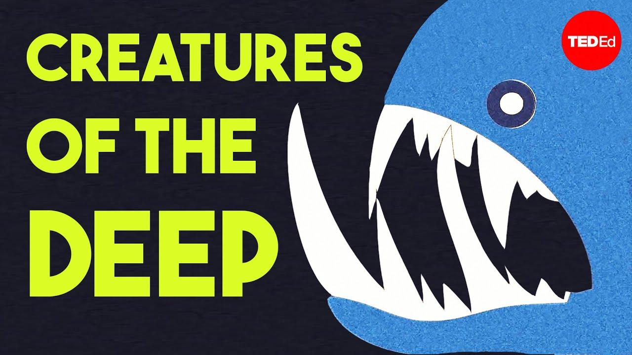 """Poster 24/"""" x 36/"""" Shark Atlantic Ocean Sea Diving"""