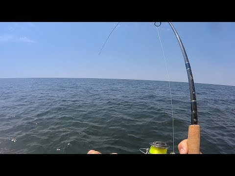 Florida Offshore Fishing- Red Snapper, Triggerfish, Mingos, & MONSTER Bonita