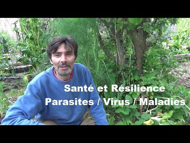 La résilience dans les écosystèmes