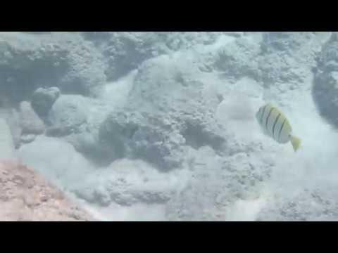 Snorkeling at Slaughterhouse Beach (Maui, Hawaii)