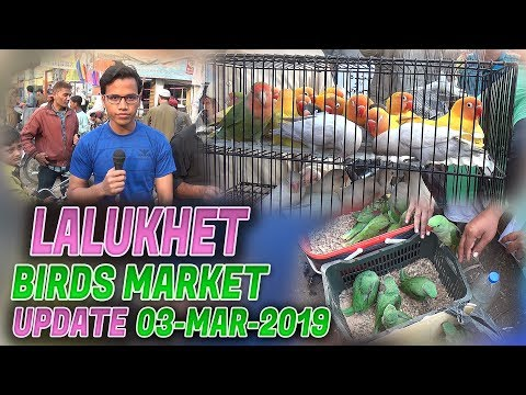 Lalukhet Sunday birds Market 3-3-2019 Latest Updates (Jamshed Asmi Informative Channel) Urdu/Hindi