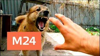 Как уберечься от нападения собак - Москва 24