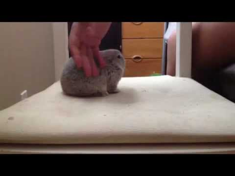 How to: Hold your Bunny Rabbit - YouTube