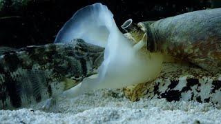 Это настоящий подводный танк! САМАЯ ОПАСНАЯ улитка и ее друзья! смотреть онлайн в хорошем качестве - VIDEOOO