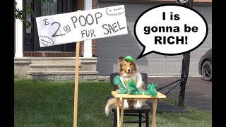 'I is Gonna be RICH!'  a Biscuit Talky Compilation on Cricket 'the talking sheltie' Chronicles