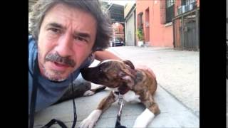 Dog Submissively Pees Or When Excited  .........peter Caine Brooklyn Dog Training