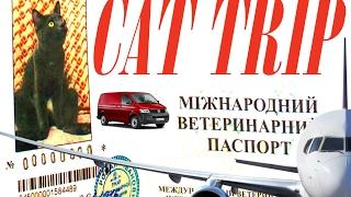 Правила, документы и справки для перевозки животных из Украины.