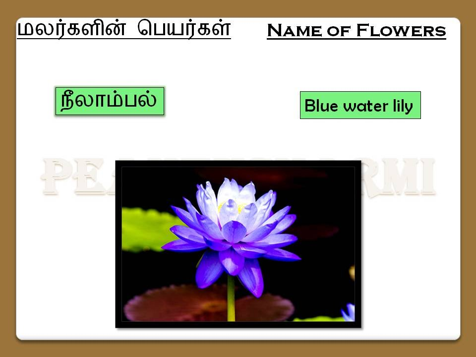 name of flowers in tamil  part i, Beautiful flower