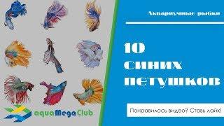 Новинки 18 - 10 рыбок петушков синего цвета
