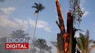 El planeta se queda sin su pulmón: casi 73,000 incendios en selva amazónica en lo que va de 2019