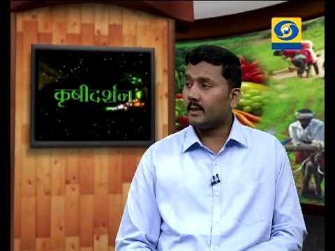 Krishidarshan - 26 April 2018 - हरितगृहातील फुलशेती