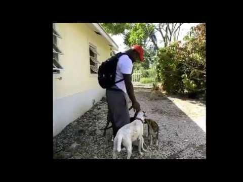 Pawtcake Refuge Nassau Bahamas