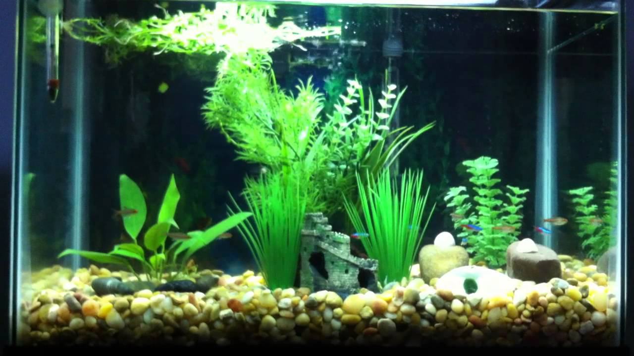 20 gallon neon tetra and glowlight tetra fish tank youtube for Tetra fish tanks