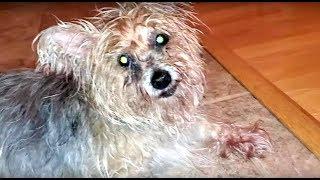 He heard her screaming! | Dumpy Rescue