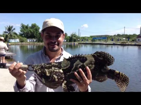 SW Jurassic Fishing Pond, Malaysia: GT, Groupers, Snappers & More!