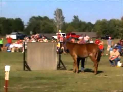Pea Ridge Mule Jump - 2011