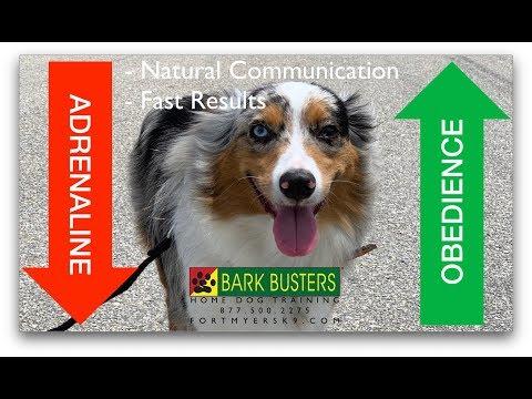 #australianshepherd  #aussie Dog Training of #FortMyersK9 - Best Dog Trainer