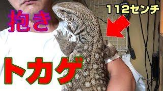 サバンナモニター名前はひろし。 爬虫類のYouTuber「爬虫ber」です。 ケ...