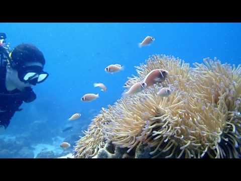 Koh Samui Thailand Scuba Diving 2017