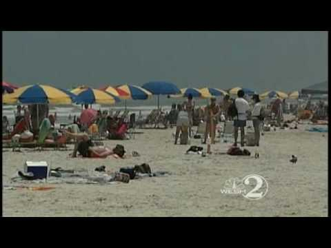 Consultant To Weigh Beach Driving Effects