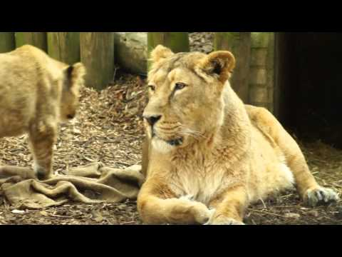 London Zoo Conservation Video