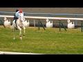 白毛馬ホワイトドラゴン、馬場入場と返し馬。京都競馬場、2017年2月5日。現地映像