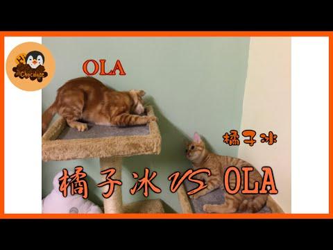 【巧克力】『橘子冰的日常』- 橘子冰 VS OLA