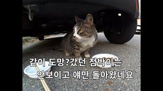 점박이와 도망?쳤던 고양이가 혼자 돌아왔습니다. 경계심이 많은 고양이라 친해지기 힘들어 보이네요.