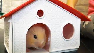 Хомяк в новом домике для домашних питомцев