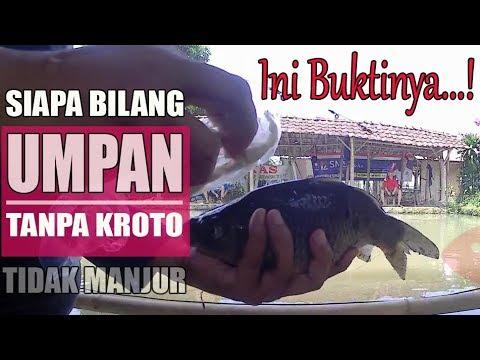 Terbukti Ampuh Umpan Ikan Mas Tanpa Kroto Malah Neter Youtube