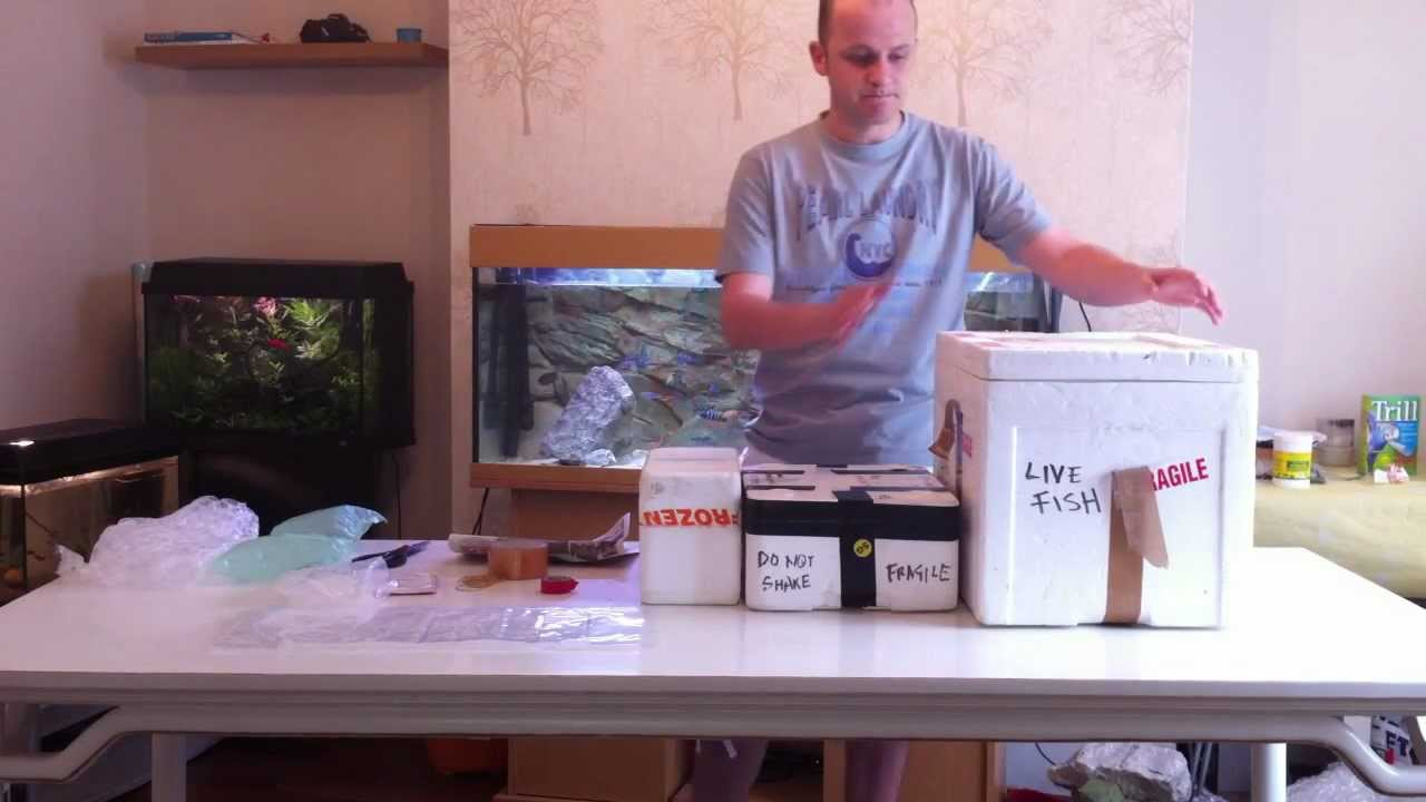 How to package live fish ready for shipping postage youtube for How much does a lifetime fishing license cost