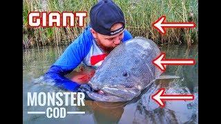 GIANT MURRAY COD - Jim's Fishing