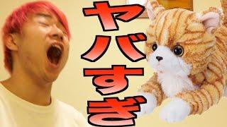 日本語をしゃべる猫が謎すぎたwww