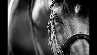 Why We Fall || Equestrian Motivation