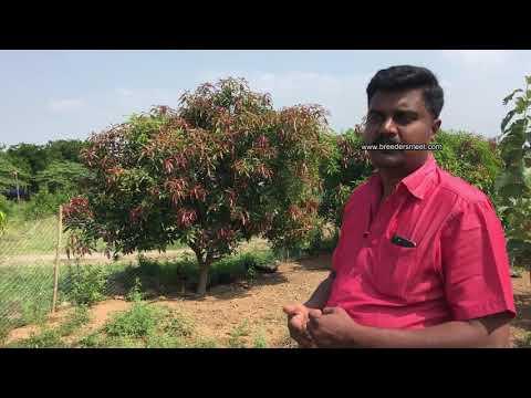 ஒரு ஏக்கரில் மாதம் 80,000 சாதித்த பட்டதாரி Sugavaneswaran-98948 00955