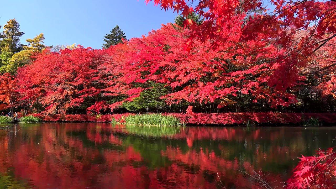 新緑から紅葉の雲場池・4K撮影   Doovi