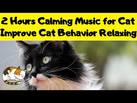 2 Hours Calming Music for Cat - Improve Cat Behavior with Relaxing Music