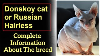 Donskoy cat or Don Sphynx or Russian Hairless. Pros and Cons, Price, How to choose, Facts, Care.