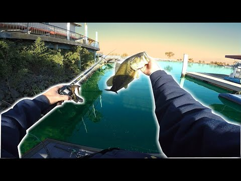 DELTA BED FISHING IN SUPER CLEAR WATER ( SURPRISING)