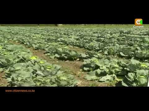 Agri-Business Case Study: Ripened for the Market