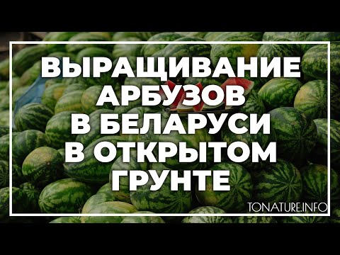 Выращивание арбузов в Беларуси в открытом грунте | toNature.Info