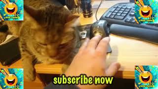 REACTING TO CUTE FUNNY CAT VIDEOS FUNNY CAT COMPILATION BRc 4iqU40c