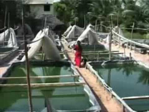 Tamilnadu Kozhi Valarpu Sangam Meet Concern Minister on Monday with ...