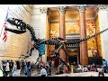 American Museum of Natural History in New York City (My Experience)
