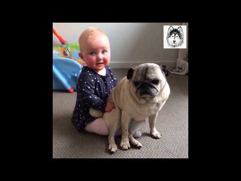 Funnny Dog Steals Package  Tongue Out ! 👅| TAB Animals