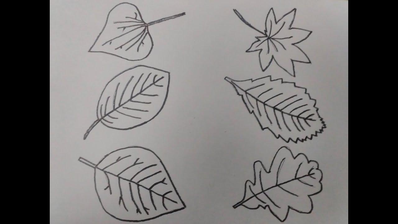 رسم رسم ورق شجر بالرصاص بسهولة اكتر من 5 انواع Youtube