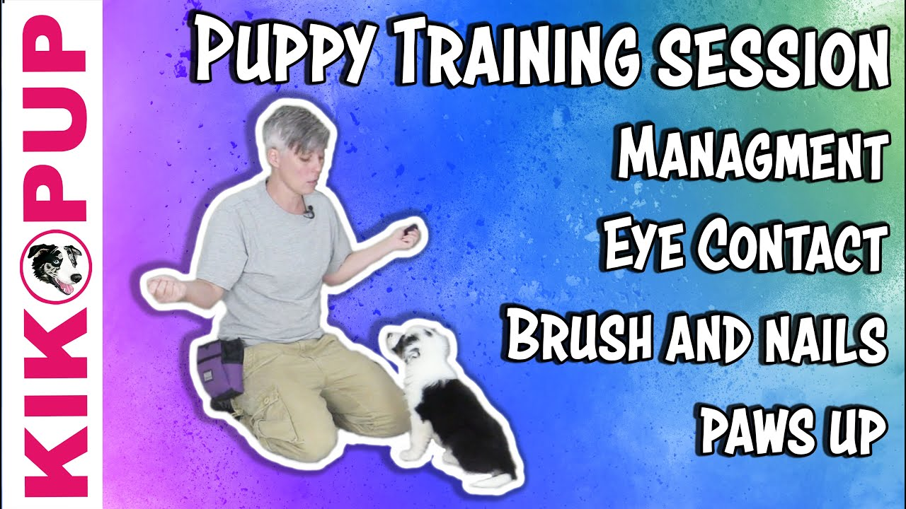 Puppy Training Session – Management and training tips