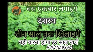 दशरथ घास पेरणी व काळजी dashrath fooder 9405359244