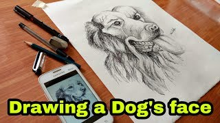 Sketch/Drawing of a Dog's Face | Animal Sketch | Minu Arts